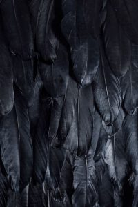 black_feathers